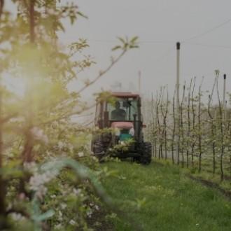 Tractor regando plantación